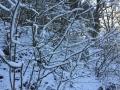Winter1415M001