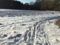 Winter1415M005