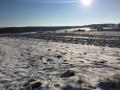 Winter1415M013